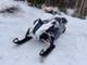 Arctic Cat XF