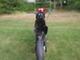 Factory bike YR50